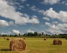 В этом сезоне аграрии недополучили более 45 млрд гривен дохода