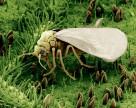 Arysta начинает продажи в Японии биопестицида для интегрированной защиты растений
