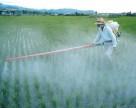 Китай уточнил информацию о строгом контроле за производством параквата