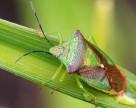 Спрос на инсектициды вырастет в южных областях Украины