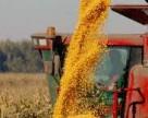 Мировое потребление зерна может достигнуть рекордного уровня