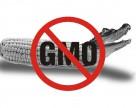 В Евросоюзе может приостановиться регистрация новых агрохимикатов и ГМО