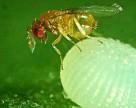 Monsanto поделилась планами по использованию биопестицидов