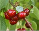 Агрохолдинг KSG Agro увеличивает земельный банк