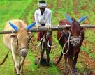 ФАО выступает за развитие мелкого фермерства