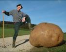 В Канаде на 2017 год приостановлено выращивание ГМ-картофеля