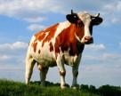 Агрохолдинг «ИМК» намерен привлечь 200 млн грн посредством выпуска облигаций