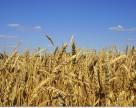 Агрохолдинг KSG Agro получит кредит 50 млн. грн.