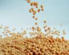 ГМ культуры уменьшают использование агрохимикатов