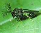 Бразилия одобрила пять биопестицидов для органического сельского хозяйства