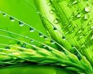 Nufarm увеличивает объемы производства 2,4-D