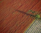 Госсельхозинспекция усилит контроль во время уборки урожая