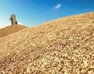 Аграрии собрали 14,5 млн. тонн зерна