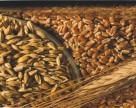 Україна нарощує експорт зернових