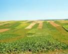 Волынская область завершила уборку ранних зерновых