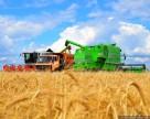 Агрохолдинг KSG Agro завершил уборку ранних зерновых культур
