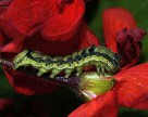 РНК-интерференция в защите растений