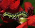 Почему вредители устойчивы к инсектицидам