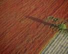 Компании с иностранными инвестициями не смогут приобретать землю сельскохозяйственного назначения