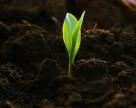 Почва стала средством защиты растений