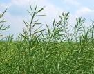Агрохолдинг «Мрия» увеличил земельный банк на 6,9 тыс. га
