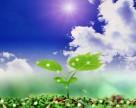 Bayer: Защита растений – перспективный бизнес