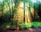 Как в Швейцарии берегут лес от вредителей?