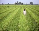 Индия намерена отказаться от импорта минеральных удобрений к 2023