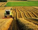 Рада отказалась продлить мораторий на продажу сельхозземли
