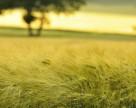 В Херсонской области не взошла озимая пшеница