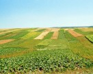 Госсельхозинспекция Украины выявила более 12 тыс. нарушений земельного законодательства за 9 месяцев 2012 г.