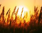 Озимые зерновые в Украине взошли на 93% площадей