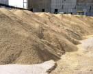 Аграрный фонд ввел режим государственных залоговых закупок зерна