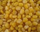 Малайзия закупила в Украине 50 тыс. тонн кукурузы
