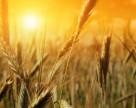 Аграрный фонд распродает зерно