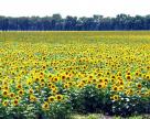 Земли на Юге Украины теряют привлекательность