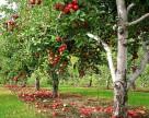 Агрохолдинг  «Сварог Вест Груп» увеличит земельный банк на 20 тыс. га
