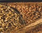 Рынок зерна  оживился