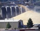 Аграрный фонд купит форвардом 620 тыс. т зерна урожая 2013 года