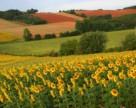 Украина засеет  27,7 млн га