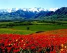 Кыргызстан договаривается с Узбекистаном о поставках 200 тыс. тонн минеральных удобрений