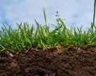В украинских почвах все меньше гумуса