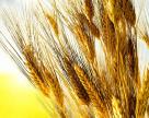 Продать пшеницу – чтобы купить… пшеницу? А зачем?