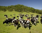 Хмельницкая область — упор на животноводство