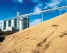26 млн т пшениці – прогноз УЗА щодо експорту в рекордний рік