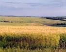 В Украине увеличилось количество вносимых удобрений