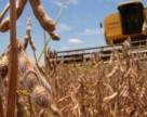 Украина удвоит производство сои
