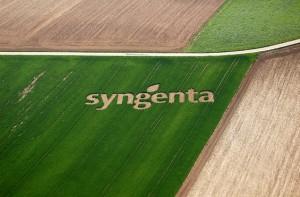 Syngenta создаст на Ставрополье семеноводческую лабораторию
