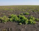 Monsanto и Dow создают полигоны