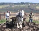 Украинские аграрии массово переходят на карбамид
